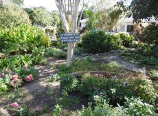 Beautiful garden area at Assisted Living